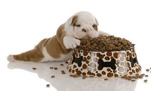Dog Food Mats