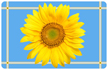 Sunflower Blue Mat